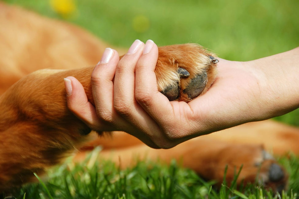 The Definitive Guide to Pet Insurance